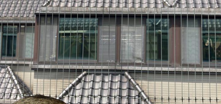 完善的寵物防墜隱形鐵窗裝置,讓您的孩毛更安全❤